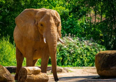 Elephant-0920