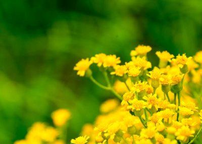 flowers-0201